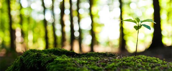 bienestar ambiental